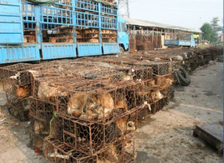 Unsägliche Situation / This action is an alldays situation in China, Consumption of Dog-Meat is forbidden, but...