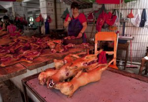 A vendor cuts butchered dogs at a dog meat market in Yulin ahead of a local Dog Meat Festival, Guangxi Autonomous Region, June 17, 2015. Yulin has an annual dog meat festival scheduled on June 21. Picture taken June 17, 2015. REUTERS/Stringer CHINA OUT. NO COMMERCIAL OR EDITORIAL SALES IN CHINA